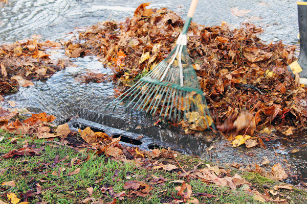 Leaves covering drain with rake