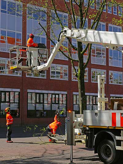 Team of arborists remove parts of damaged tree