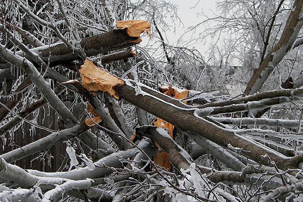Downed trees from ice storm